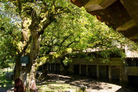 Mosteiro S. João Arga